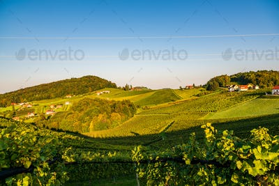 Austria Vineyards Sulztal wine street area south Styria , wine country. Tourist destination