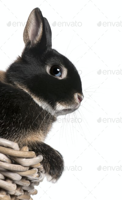 Rabbit sitting in basket in front of white background