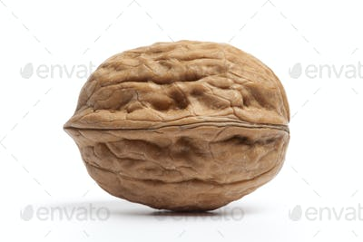 Whole single fresh Walnut