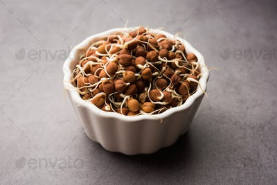 Black chana or brown chickpeas sprouts in a bowl. selective focus