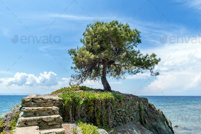 Lonely tree on the rock in the sea background