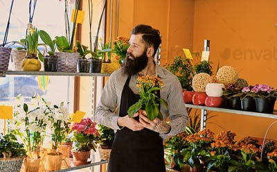 The bearded flower seller holds flowers in a pot in a garden mar