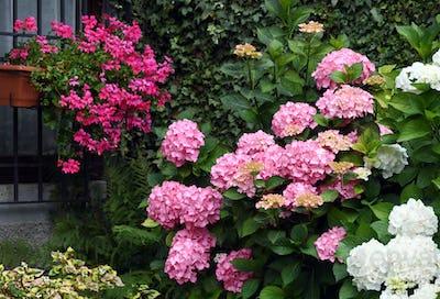 Beautiful floral garden