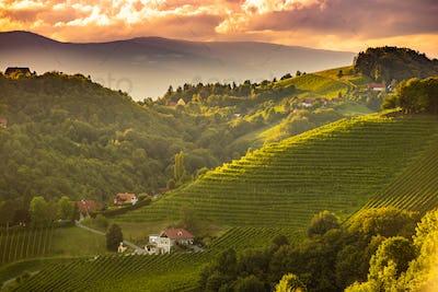 Sunset landscape of vineyard rows on Austrian countryside in Leibnitz Kitzeck im Sausal