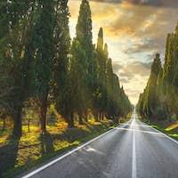 Bolgheri famous cypresses tree straight boulevard. Maremma, Tuscany, Italy