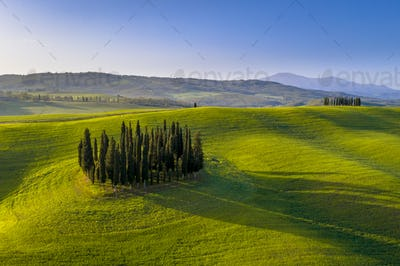 Aerial view of group of cypress trees