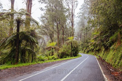 The Yarra Junction to Noojee Rd winds thru ancient forest near Powelltown in Victoria, Australia
