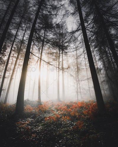Sunlight shining through the misty woods