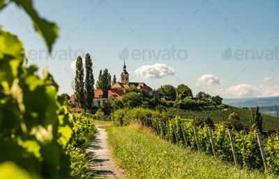 Vineyard on Austrian countryside with a church in the background.