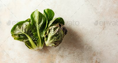 Fresh seasonal lettuces
