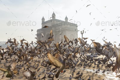 Large flock of pigeons on open space with arch monument in background.