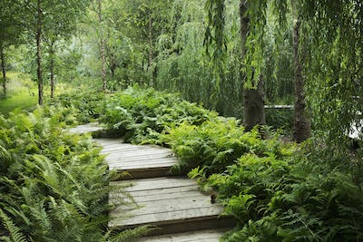 Willow trees and fern growing around curved wooden boardwalk in a garden.