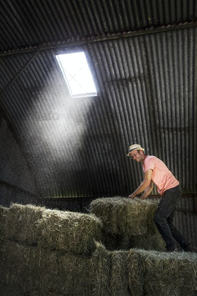 Farmer stacking hay bales in a barn.