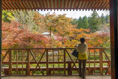 Rear view of woman standing on wooden balcony, looking out onto autumn trees in a park.
