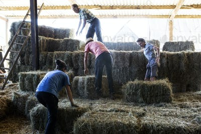 Farmers stacking hay bales in a barn.