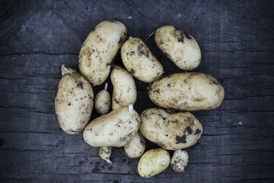 Close up of freshly harvested potatoes on dark blue background.