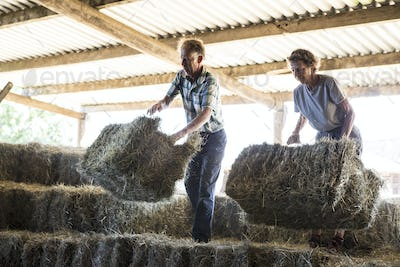 Two farmers stacking hay bales in a barn.