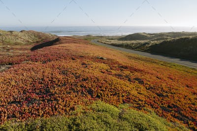 Landscape covered with ice plant.