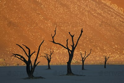 Desert landscape with small cluster of dead trees.
