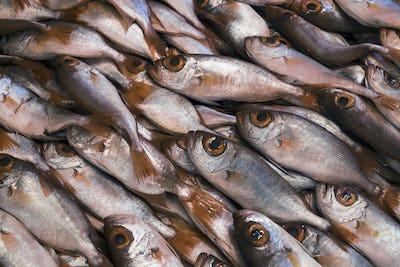 High angle close up of fresh fish at a fish market.