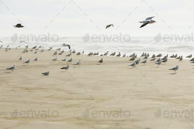 Large flock of seagulls on sandy beach by ocean.