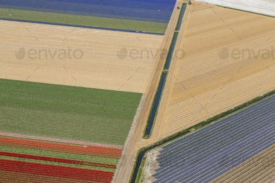 Aerial view of rows of colourful fields of tulips.