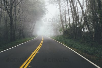 Rural highway through a forest of alder trees into the distance, mist hanging in the trees.