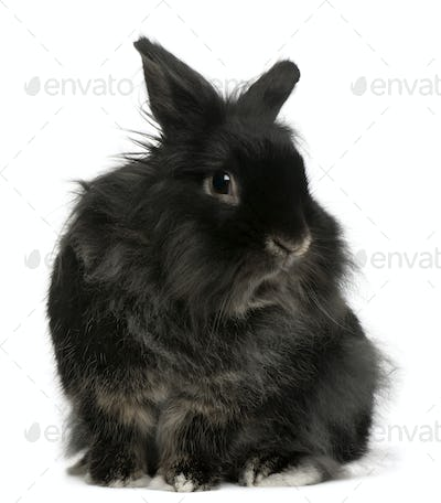 Rabbit, 5 years old, in front of white background