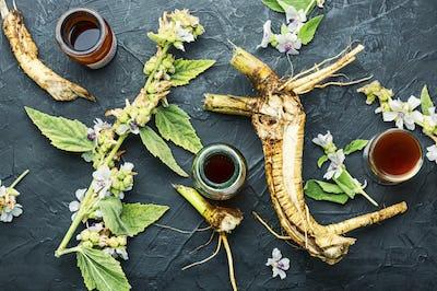 Althaea root in herbal medicine