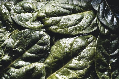 Macro photography of fresh spinach. Concept of organic food. healthy foods, vegan
