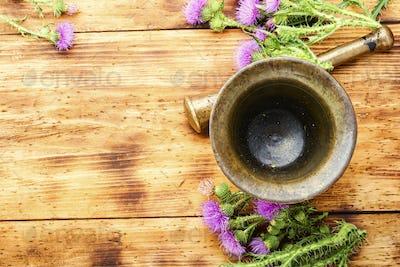 Milk thistle in herbal medicine