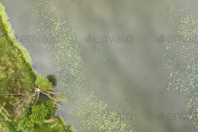 Aerial view of a bank of a lake with green waterlily leaves floating on water surface