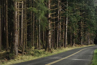 53773,Forest trees along rural road