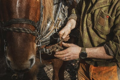 Close up of logger fastening the harness on one of his work horses.