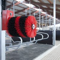 52620,Cow Brush in a Cowshed
