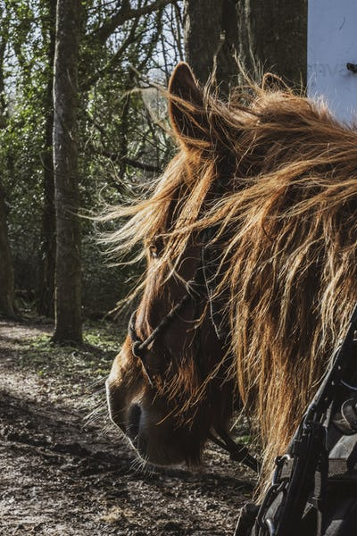 Close up of brown work horse's head in a forest.