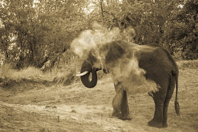 elephant dousing itself with dirt