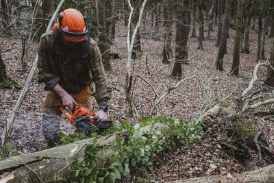 Man wearing safety gear using chainsaw to fell tree in a forest.