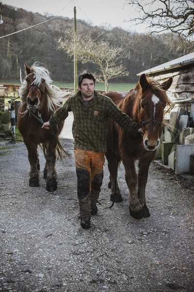 Portrait of a logger with two of his work horses.
