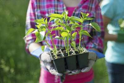 A young girl holding a tray of young rooted seedlings on a farm.