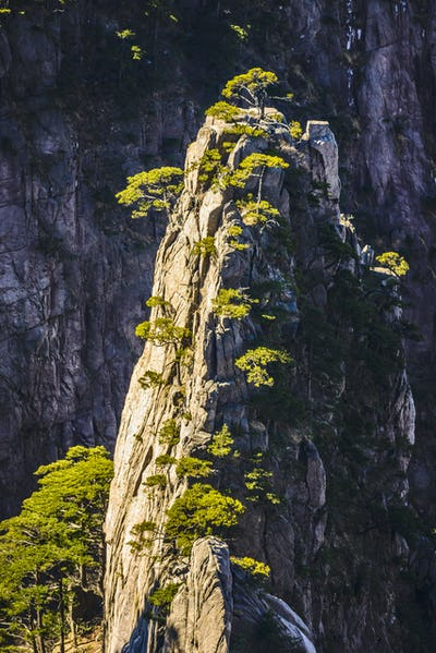 54362,Trees growing on rocky mountains, Huangshan, Anhui, China