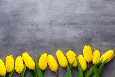 Yellow spring flowers, tulip on a gray background.
