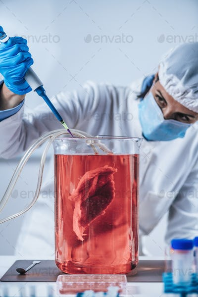 Lab-Grown Meat or in Vitro Meat