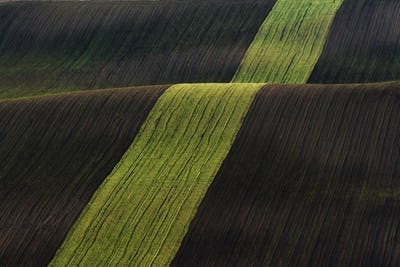 Line of fresh trees on the green agriciltural fields at daytime