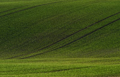 Green agricultural fields of Moravia at daytime. Nice weather