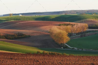 Beautiful nature. Trees on the green agriciltural fields at daytime