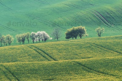 Beautiful meadow. Green agricultural fields of Moravia at daytime. Nice weather