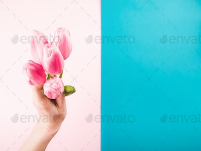 Female hand with tulips on pink and blue backdrop