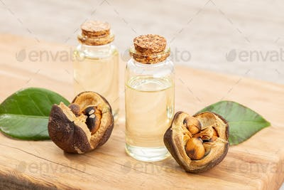 Camellia essential oil bottle and camellia seeds