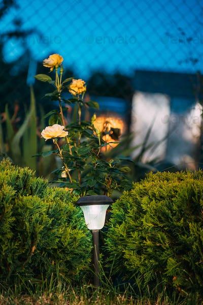 Night View Of Flowerbed Illuminated By Energy-Saving Solar Powered Lantern On Courtyard. Beautiful
